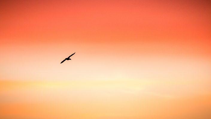Silhouette sur lever du soleil